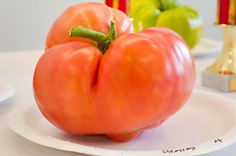 TomatoContest