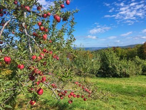 Bear Swamp Orchard & Cidery (Photo courtesy of Steve Gougeon)
