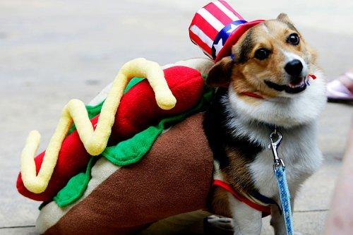 dog_costumes1
