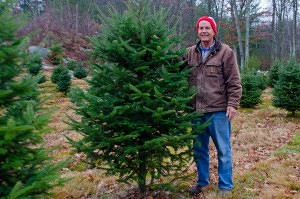 Casey Vandervalk stands next to one of his growing Christmas Trees at Vandervalk Farm & Winery (NewBostonPost, photo by Beth Treffeisen)