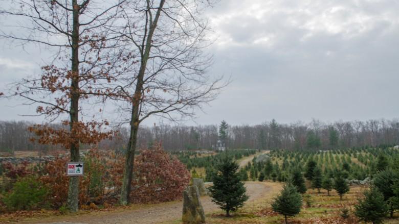 Vandervalk Farm & Winery in Mendon, Mass. on Thursday, Dec. 10, 2015. (Beth Treffeisen, NewBostonPost)