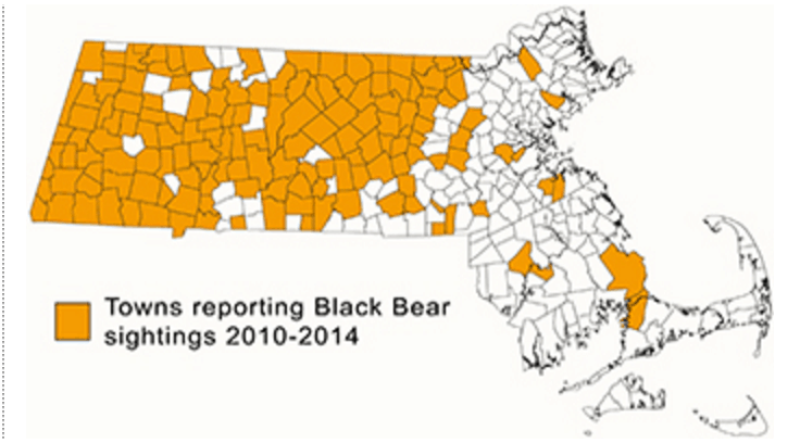 Reports of black bears in the state (courtesy of the Massachusetts Division of Fisheries and Wildlife)