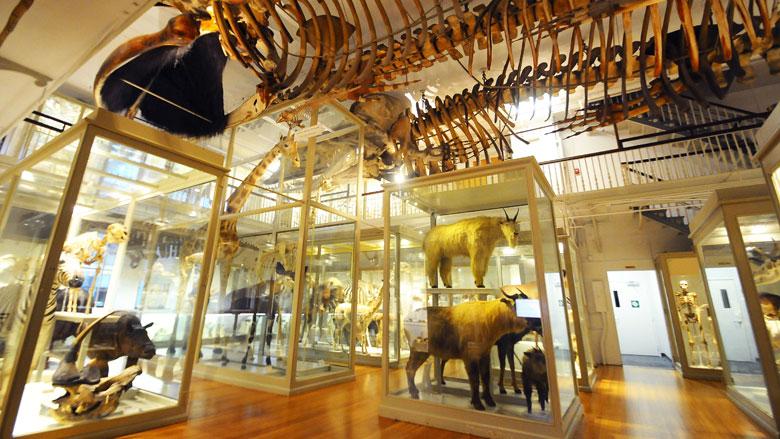 great mammal hall