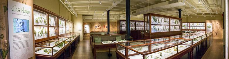 glass flowers gallery