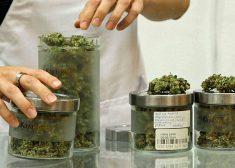 marijuana-at-dispensary