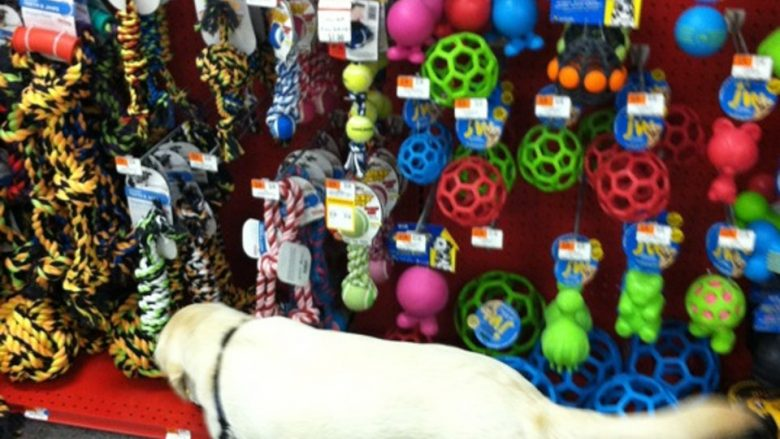 Massachusetts Legislature Must Protect Pets Consumers Pet Stores