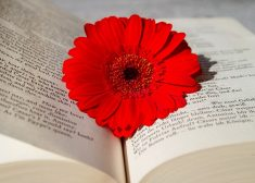 English Book Translation With Red Flower Photo — Saved Wednesday 3-28-2018