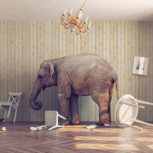 Why Educational Policies Fail:  The Elephant in the Family Room