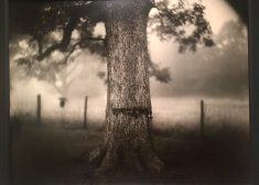 Sally Mann Photo — Beauty and Brutality of the South — Tree Scarred — Diane Kilgore Story — Saved Saturday 7-21-2018