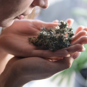 Text of Marijuana Notice Posted at Springfield YMCA